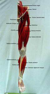 101 Best Images About Human Anatomy  U0026 Physiology On Pinterest
