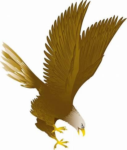 Eagle Kartun Elang Gambar Burung Bald Clip