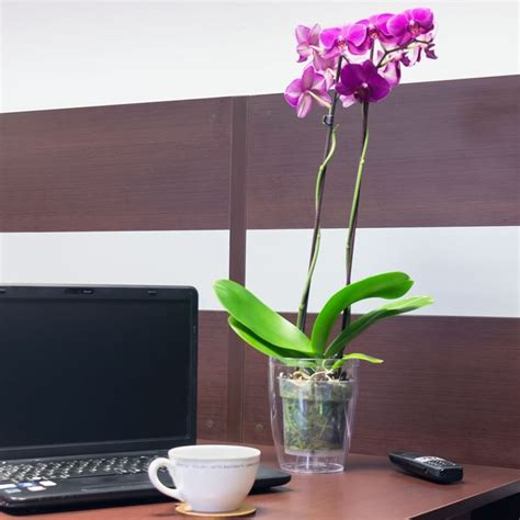 orchidea vaso trasparente vasi per orchidee vasi tipologie di vasi per orchidee