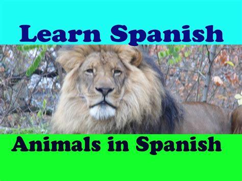 Learn Spanish # Spanish for beginners # Animals in Spanish ...