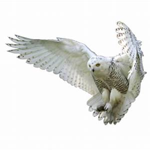 Flying Owl Png