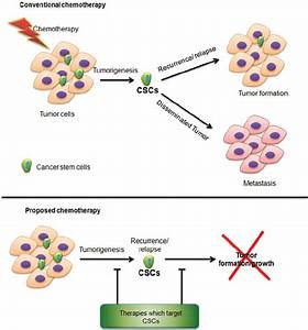 Conventional And Proposed Chemotherapeutic Strategies In