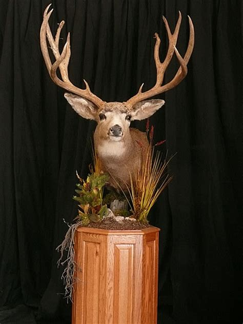 deer taxidermy options