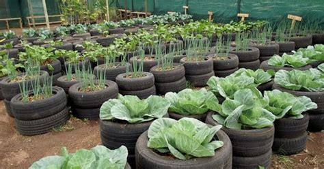 tyre vegetable garden gardening  pots containers