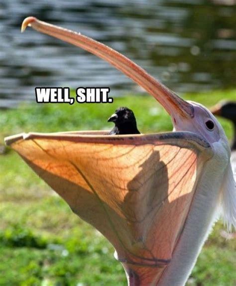 Bird Shit Meme - really funny memes well shit