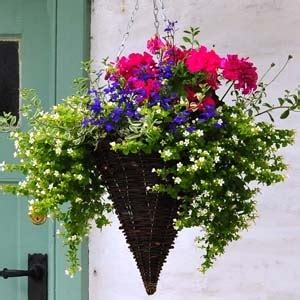 hanging basket ideas  garden life