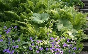 Farn Im Garten : farne vermehren mein sch ner garten ~ Orissabook.com Haus und Dekorationen