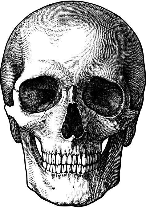 Vintage Skull Drawing For Photo Transfer Thanks