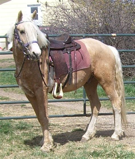 curly horse hypoallergenic joe hair haired without winter enquiring sherri shed sent she they