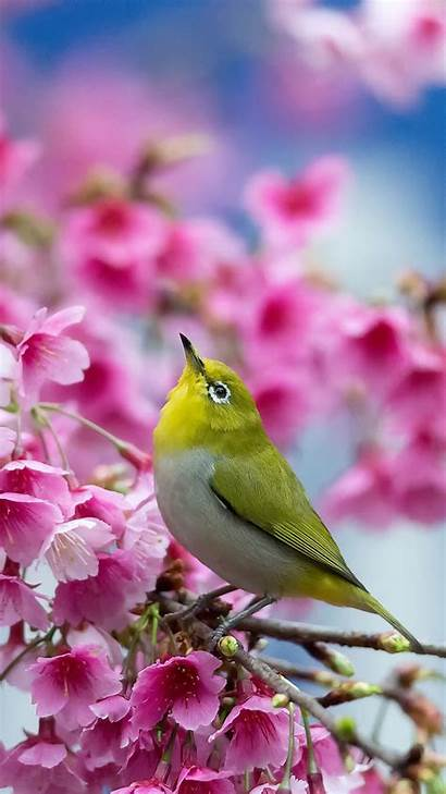 Spring Bird Birds Mobile Wallpapers Pretty Flowers