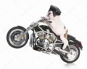 dog riding motorcycle — Stock Photo © willeecole #111546442
