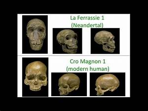 CARTA: The Genetics of Humanness: The Neanderthal and ...