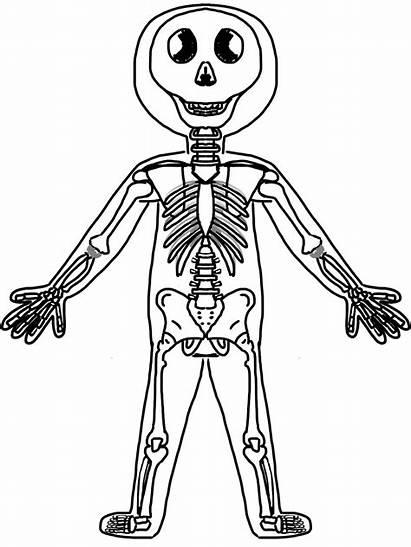 Human Skeleton Clipart System Clip Skeletal Coloring