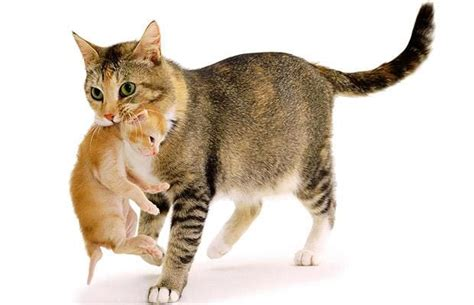 lifespan of a cat a cat s life photographs of cute cats and kittens by jane burton telegraph