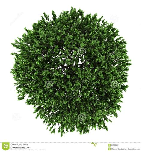 trees top view google search ref plant cutouts