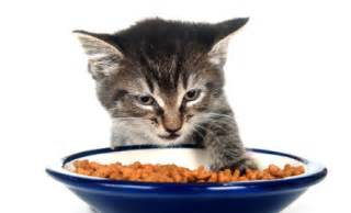 cat nutrition cat not it could be due to fussiness illness