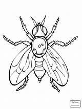 Coloring Fly Pages Fruit Firefly Insect Drawing Printable Guy Supercoloring Getdrawings Fireflies Insects Flies Animals Clipart Print Getcolorings Results Categories sketch template