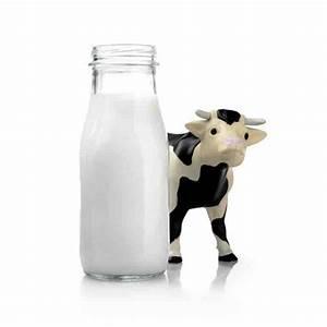 Organic Cow U0026 39 S Milk  480 Ml
