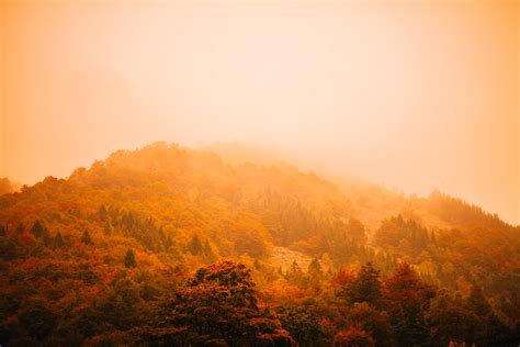picallscom autumn fog  splitshire