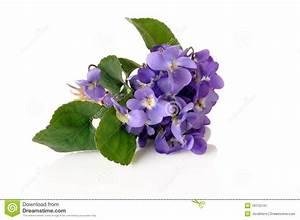 Violet Bouquet Stock Image - Image: 19172141