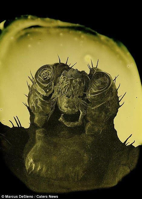 photographer marcus desieno captures microscopic images