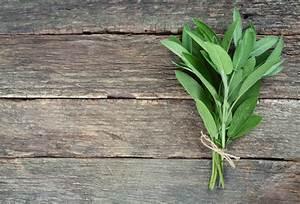 Plante Detoxifiante : cancer osos preparate din plante cu efecte antitumorale ~ Melissatoandfro.com Idées de Décoration