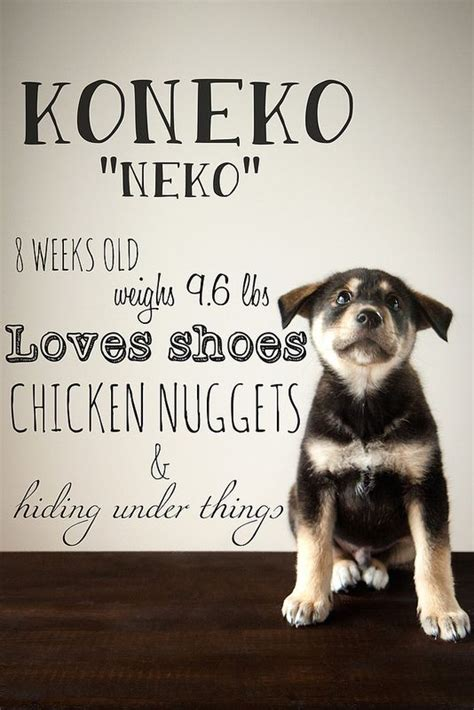 Best 25+ Puppy Photo Ideas Ideas On Pinterest  Picture Of. Printable Raffle Tickets Template. Super Bowl 2017 Invitations. Impressive Invoice Template Download Pdf. Door Knob Hanger Template. Keck Graduate Institute Pharmacy. Math Poster Ideas. Wedding Address Label Template. Sample Project Plan Template