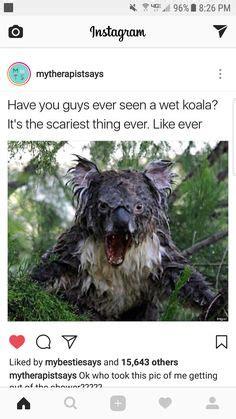 wet koala    cute pinterest