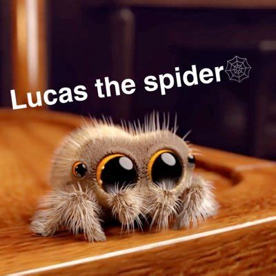 Lucas The Spider🕸🕷 (@lucasthespider2) Twitter