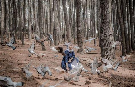 hutan pinus mangunan harga tiket masuk spot foto