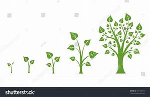 Tree Growth Diagram Green Leaf Nature Stock Vector