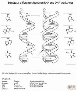 Solving The Structure Of Dna Worksheet Answers
