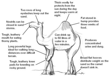 adaptive features  desert plants  animals