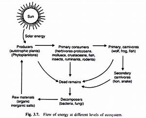 energy flow in an ecosystem with diagram With radio waves diagram diagram showing flow of