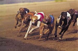 Greyhound Racing Could Be on Its Way Out – Advocacy for ...