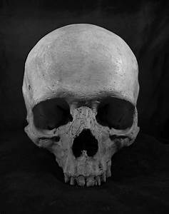 Skull by Angnatsiaq on DeviantArt