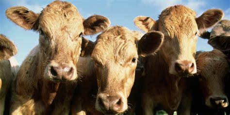 study  cut   environmental impact eat  beef