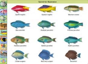 Saltwater Fish Species Names
