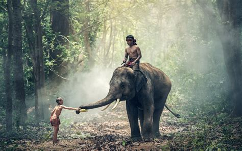 Elephant and boys HD Wallpaper M9Themes