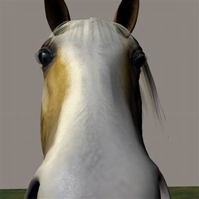 Horse Giant Makeagif Html5 Required Compatible Browser