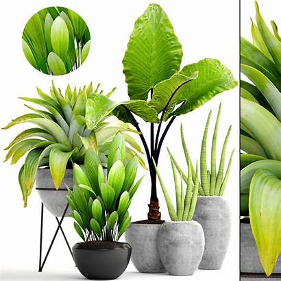 Tropical Plants Plant Models Sell 3dbrute 3dsmax