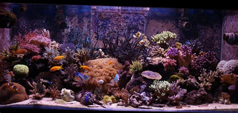 entretien aquarium eau de mer aquarium eau de mer 100l images