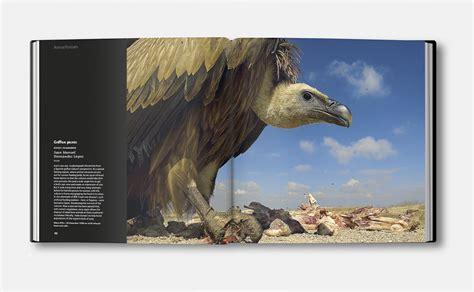 david brimble wildlife photographer   year