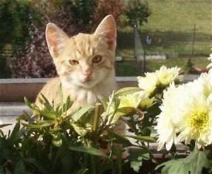 Amaryllis Giftig Für Katzen : giftige pflanzen private tierschutzinitiative ~ Frokenaadalensverden.com Haus und Dekorationen