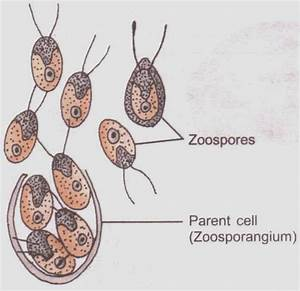 Ncert Answers Of Cbse Class 12 Biology Chapter 1