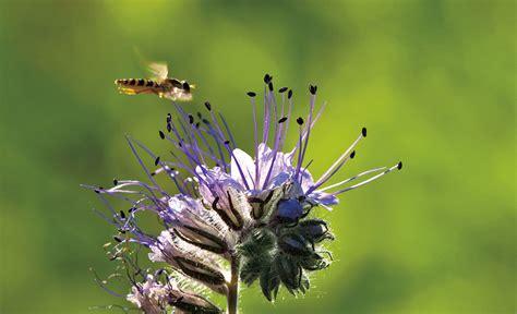 Insekten  Garten & Rasenpflege Selbstde