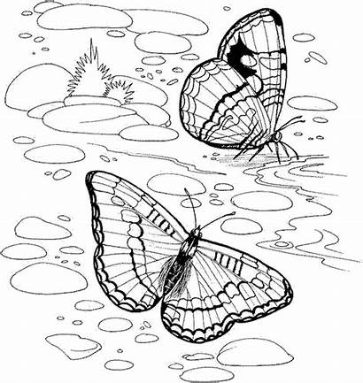Nature Coloring Pages Colouring Printable Adults Detailed