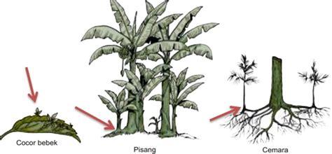perkembangbiakan tumbuhan generatif vegetatif