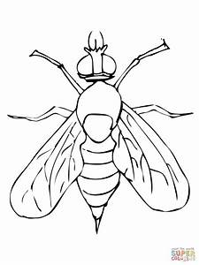 Fruit Fly Clip Art (42+)