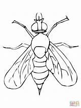 Fly Mosca Coloring Drosophila Colorear Colorare Disegno Colorir Disegni Pintar Printable Fruit Dibujos Moscerino Desenhos Frutta Ausmalbilder Dibujo Kolorowanki Fruta sketch template